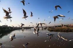 Let's unite to preserve bird habitats