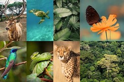 """""""Biodiversity, ecotourism development strategy"""" conference to be held"""