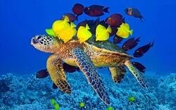 Half of endemic turtle species in Iran endangered