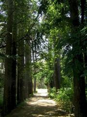 historical garden of Falahat
