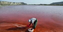 Lipar Wetland: pink treasure of southeastern Iran