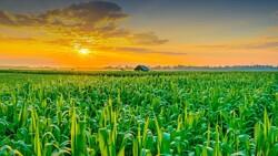 First agritourism farm to make debut in Minudasht