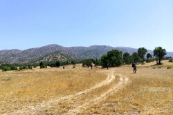 Archaeologists to shed new light on Marivan plain