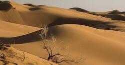 Wind erosion incurs annual loss of $714m