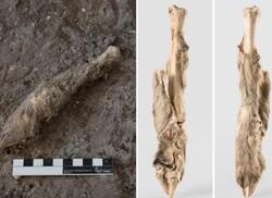 The mummified sheep leg. (Image: Deutsches Bergbau-Museum Bochum and Zanjan Cultural Heritage Centre, Archaeological Museum of Zanjan)