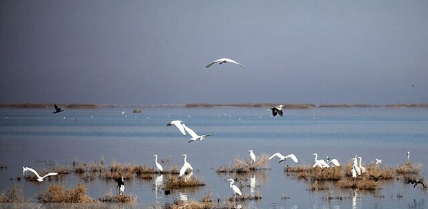 Wetlands' volume detected for first time nationwide