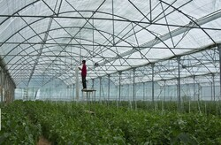 Over 3,000 hectares of new greenhouses to be established across Iran