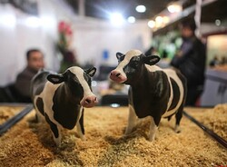 National projects launched to develop livestock, poultry industry