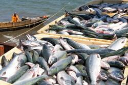 Fishery export