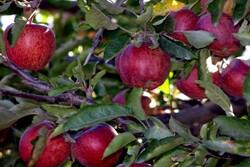 Apple export