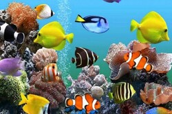 Ornamental fishes export