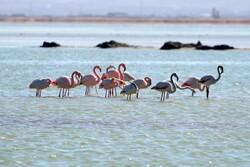 Lake Urmia restoration prescribed for Bakhtegan Wetland