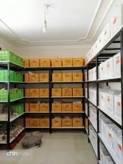 Bushehr to set up digital database of ancient potteries