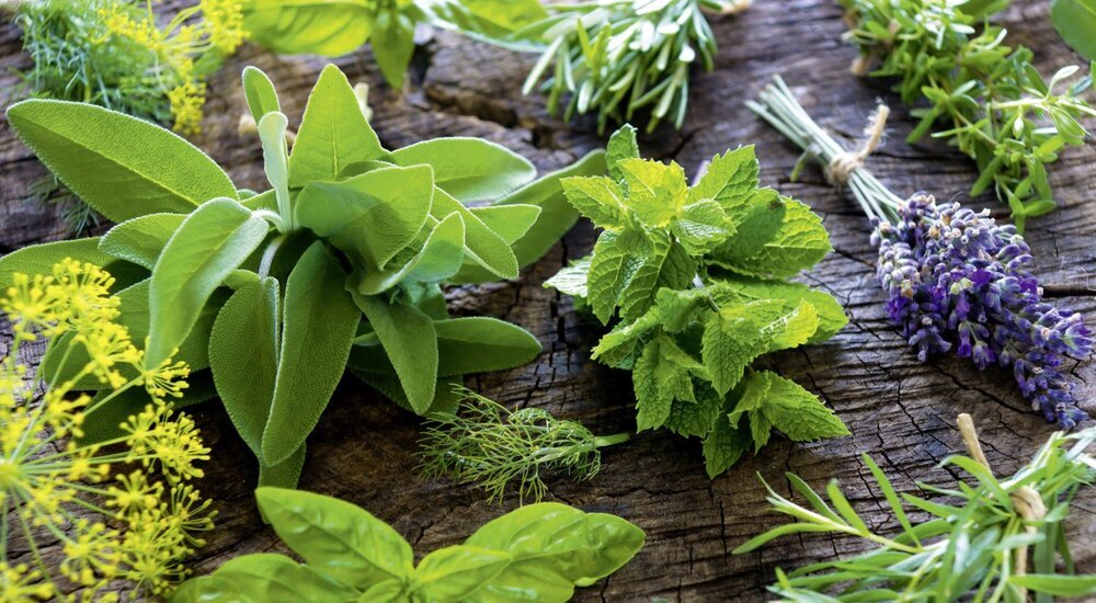 10 national plans to promote medicinal plants