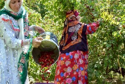 Five agritourism farms to open to public in northwest Iran