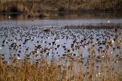 Bird paradise of Iran